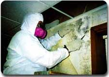 removing toxic mold allergens